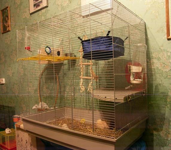 Фото как обустроить клетку для декоративного кролика